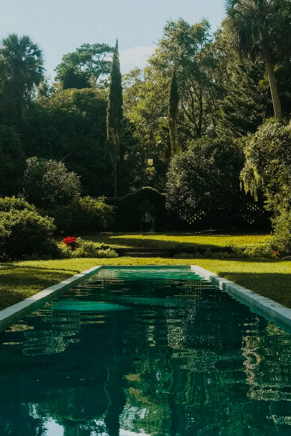 pool near trees and grasses