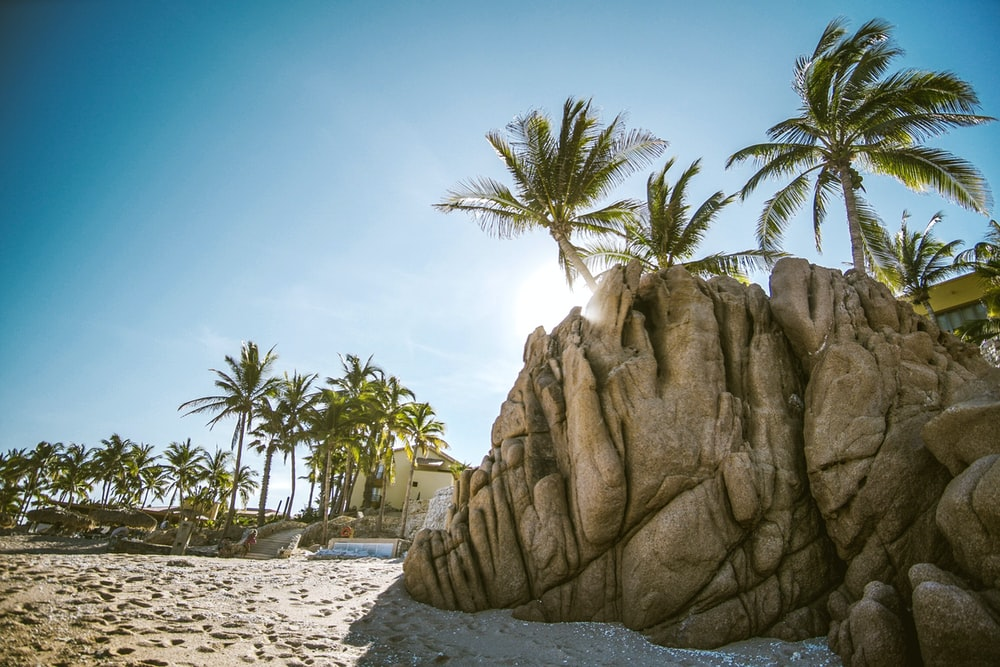 brown rock formation near coconut trees
