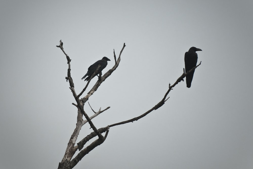 two bird on tree photography