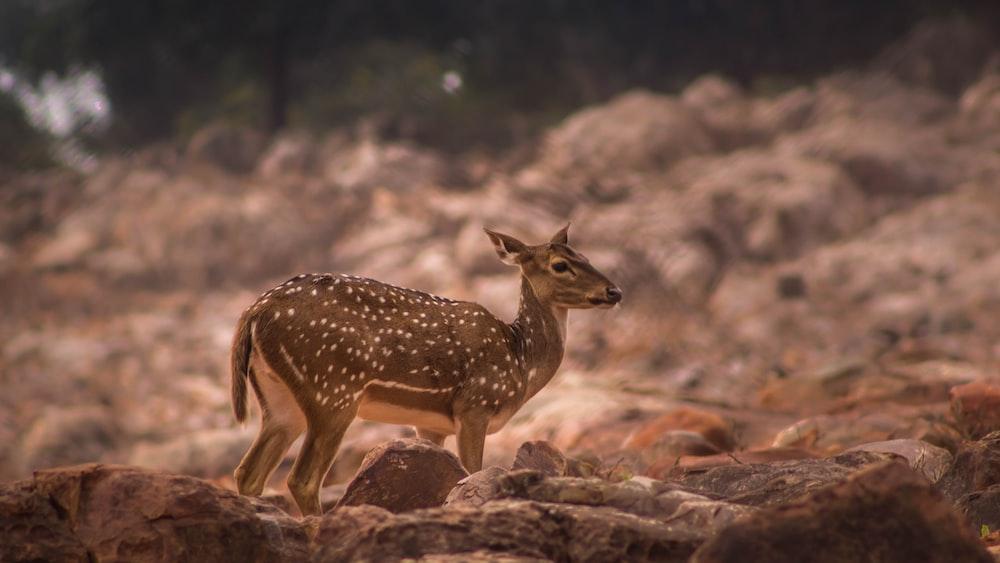 selective focus photography of brown deer standing on field