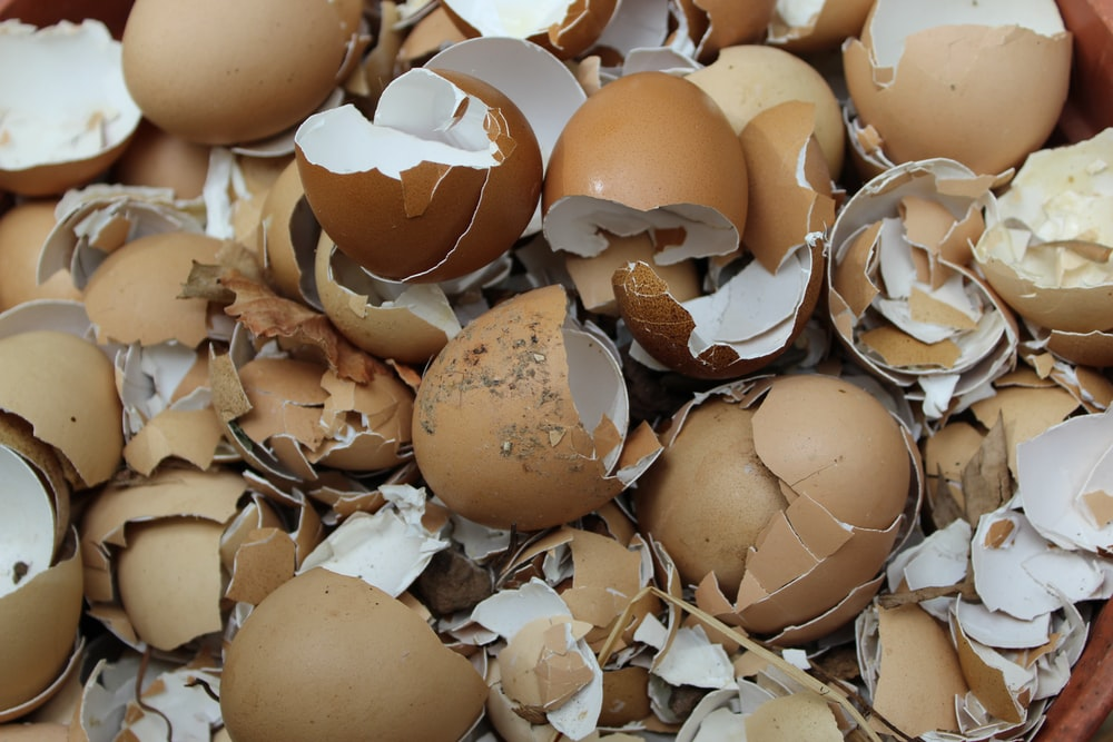 pile of cracked eggs