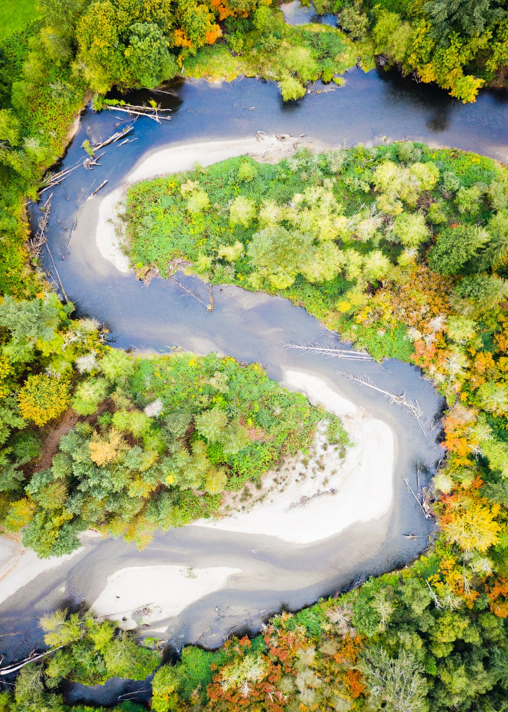 aerial photography of river surrounded by trees
