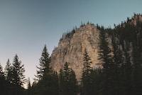 trees near rocky mountain