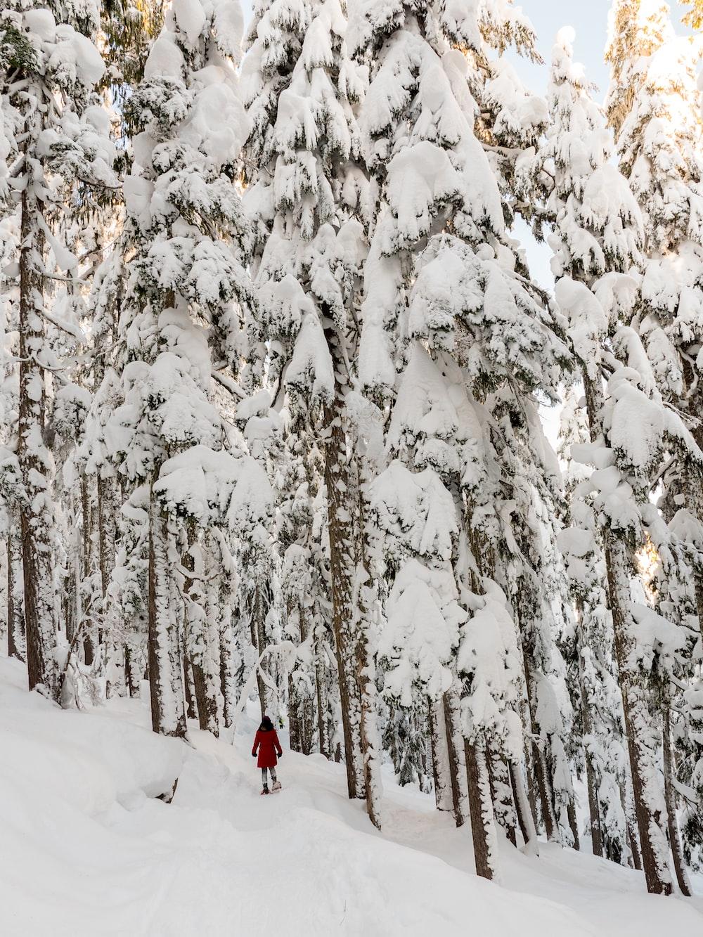 snow-covered land during daytme