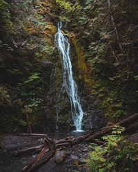 green trees beside waterfalls at daytime