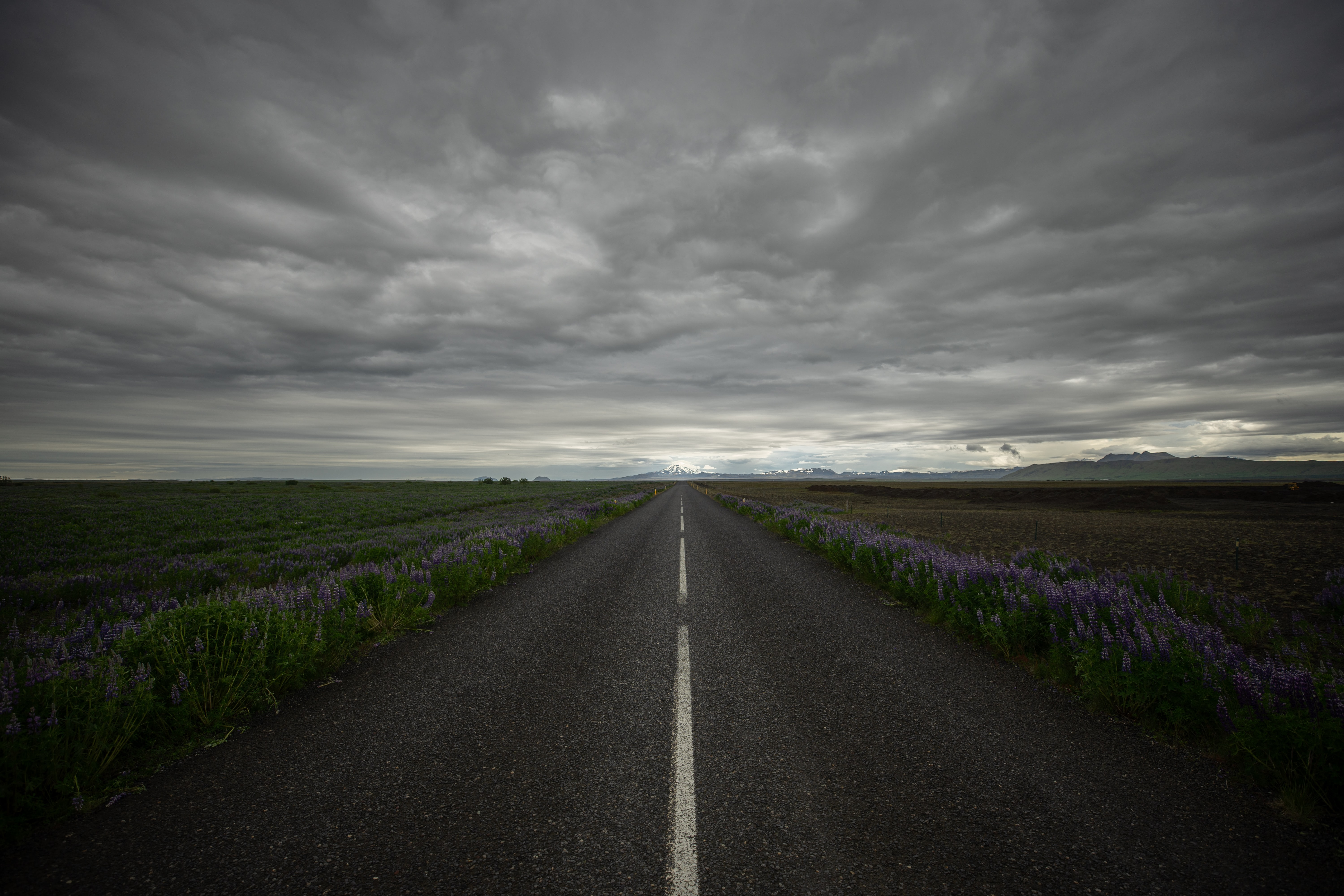 concrete road near flower and grass field