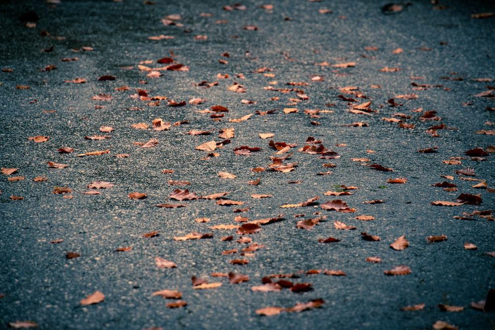 fallen dried brown leaves on blacktop road