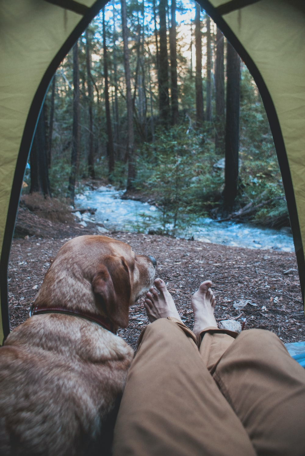 person and dog inside tent in woods