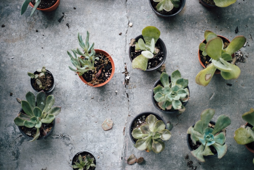 assorted succulent plants