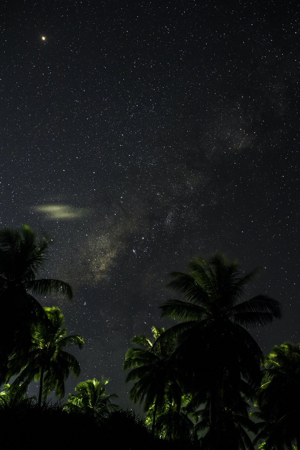 green trees under sky filled with stars