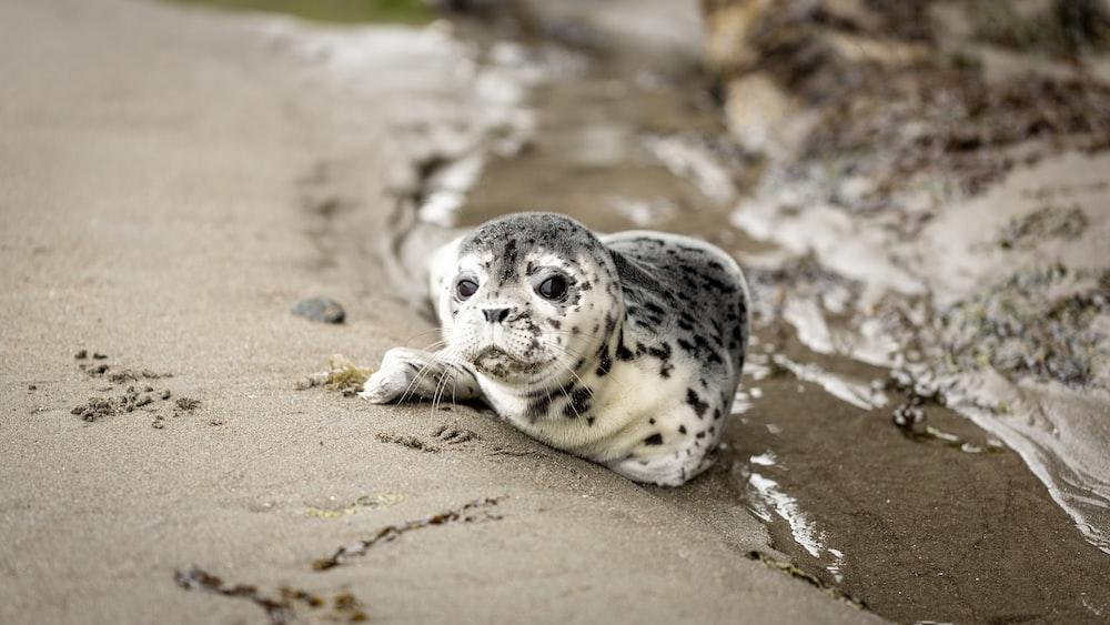seal on sandy ground
