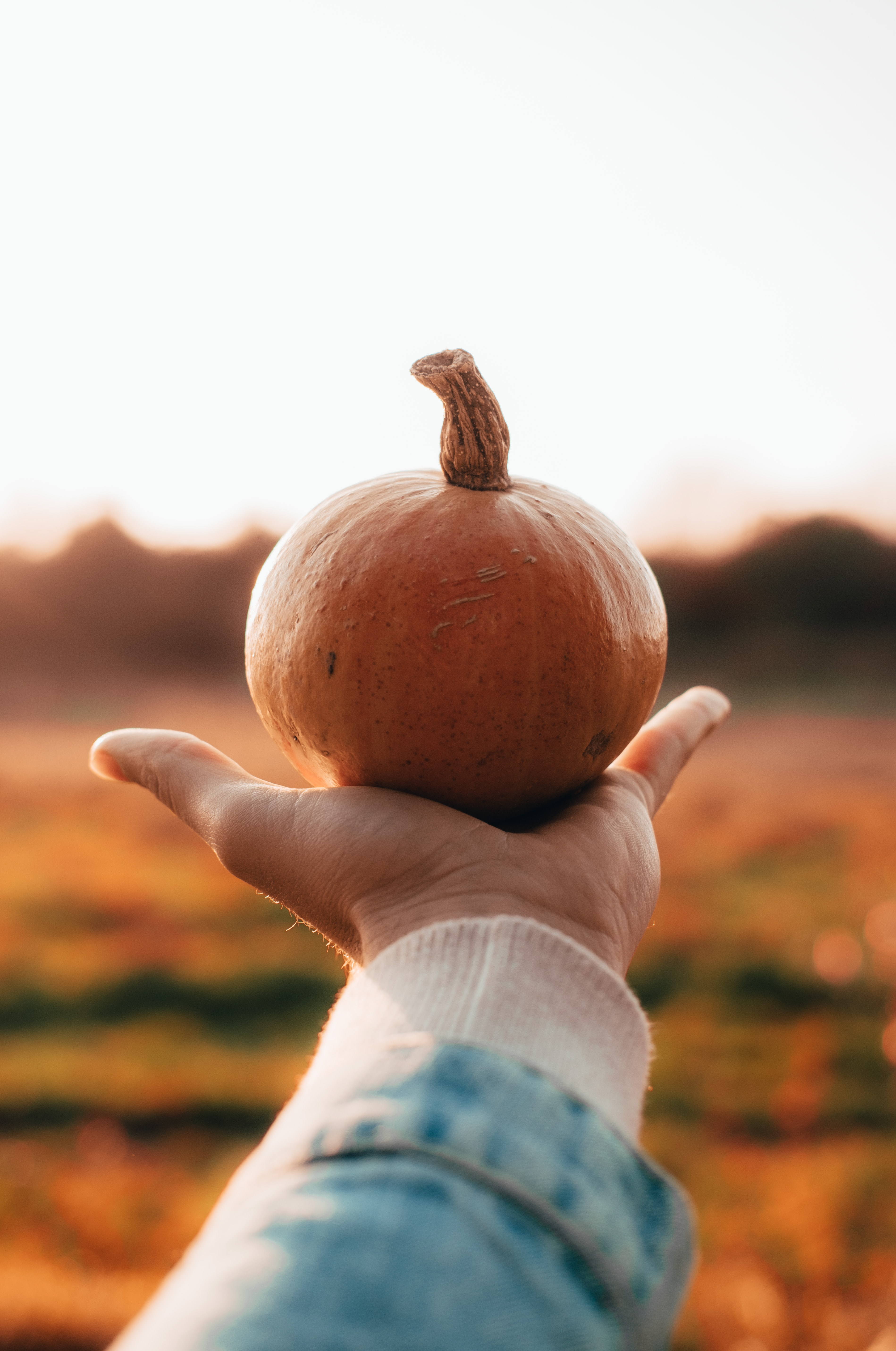 person holding pumpkin \