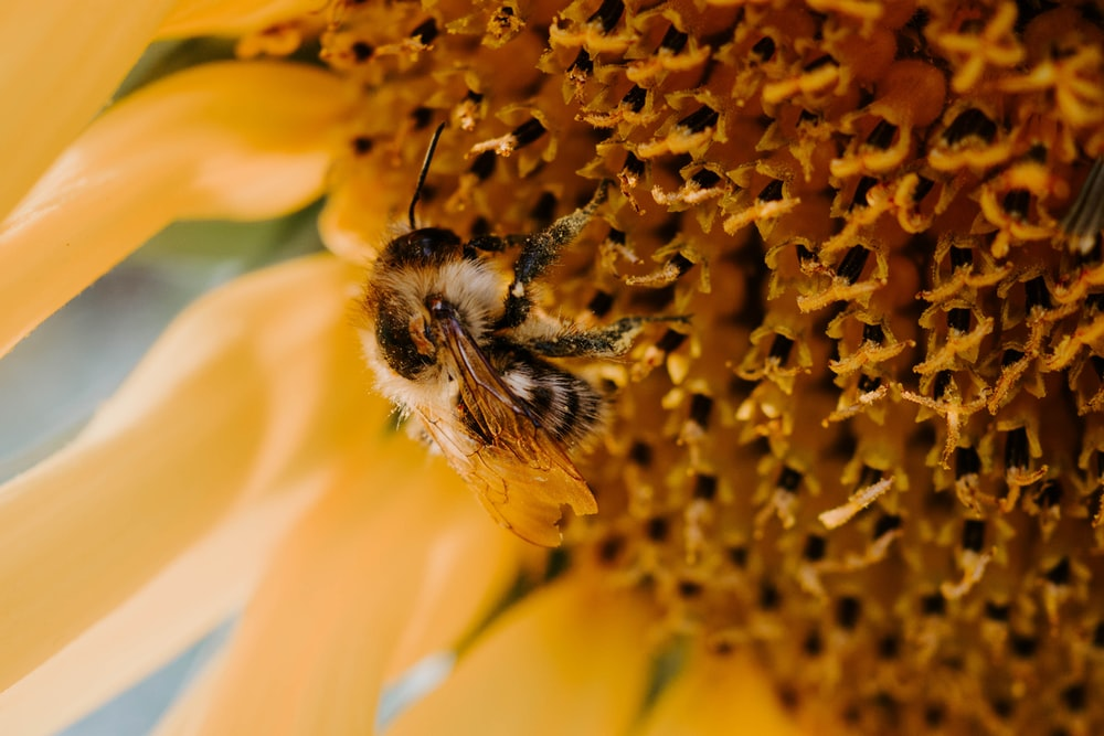 selective focus photography of bee perching on yellow-petaled flower
