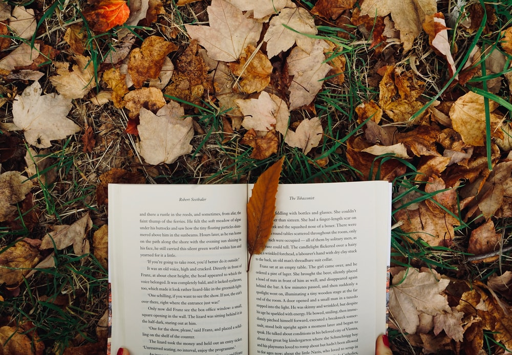 withered leaves