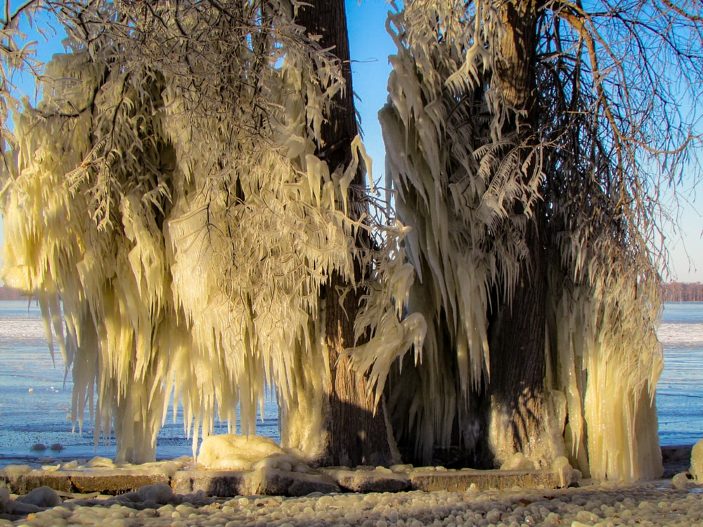 Reelfoot Lake Pictures | Download Free Images on Unsplash