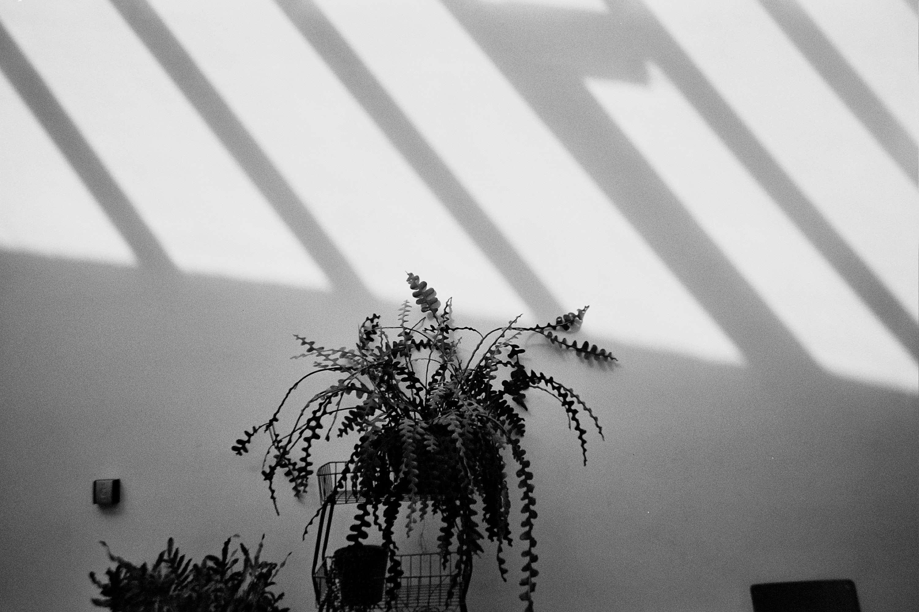 plant on pot beside wall