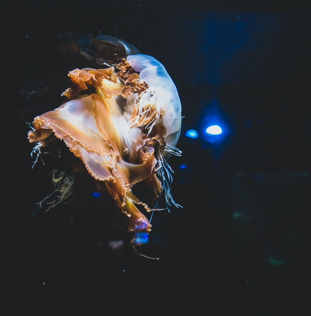 brown and white jellyfish