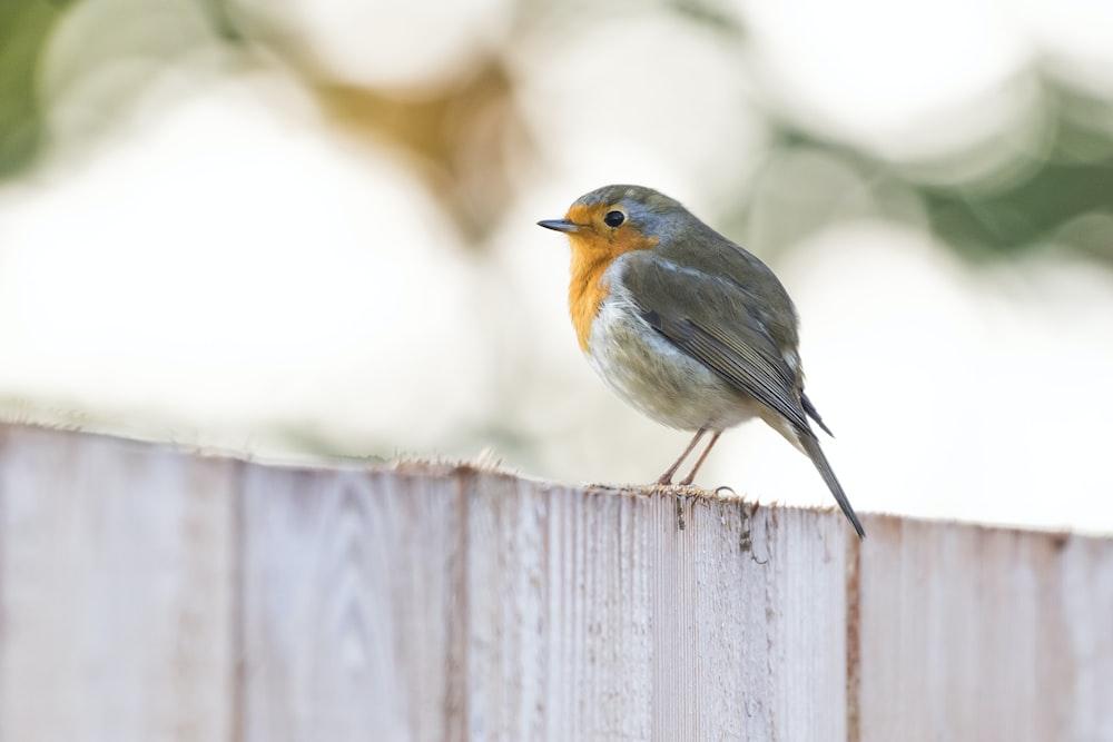 gray and orange small beaked bird on wood