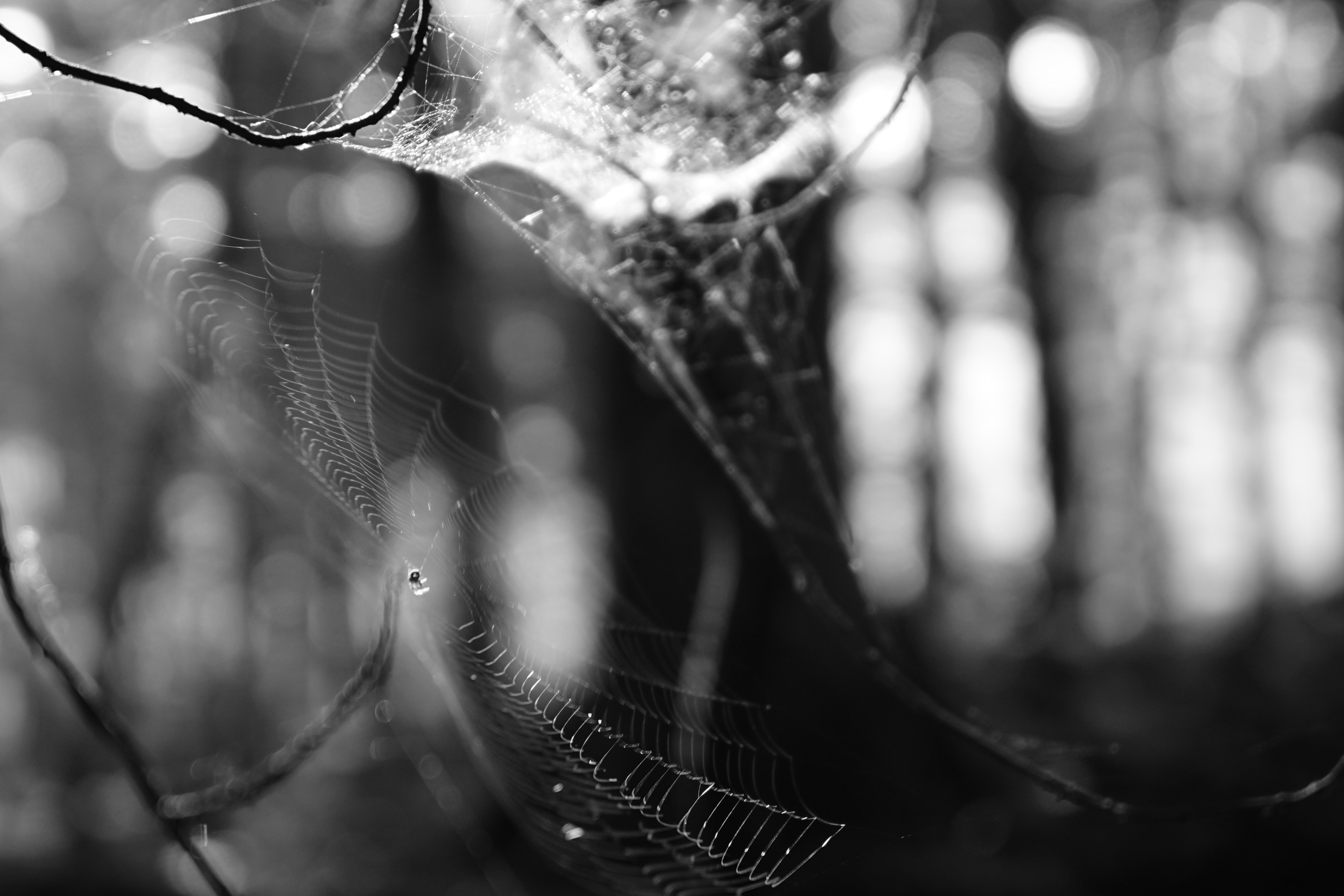 grayscale photography of spiderweb