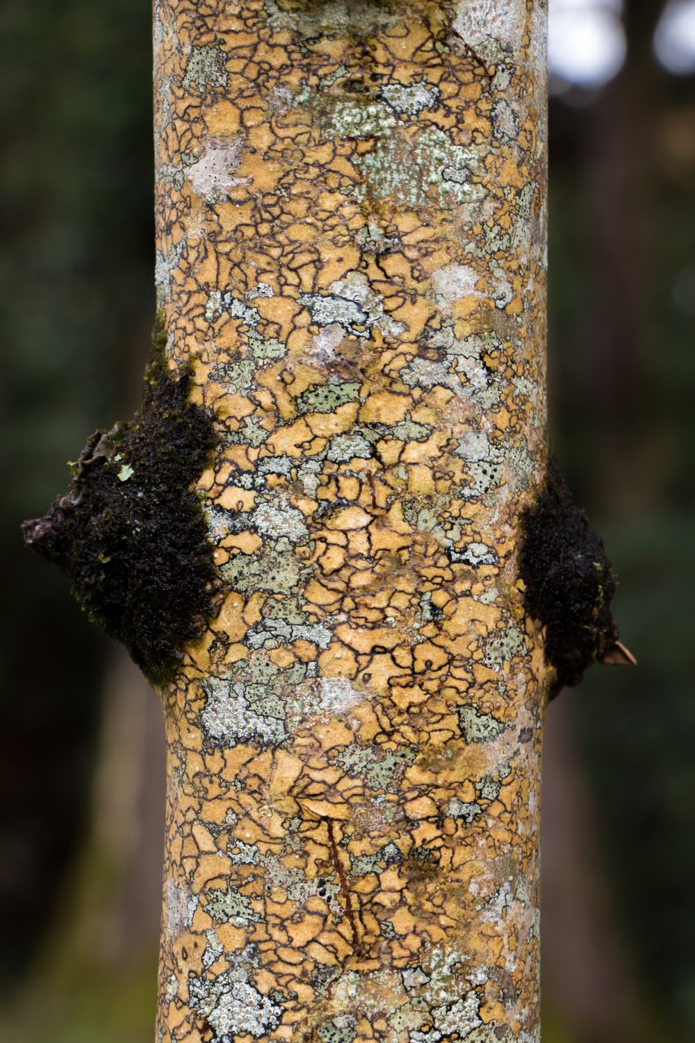 selective focus photography of tree trunk