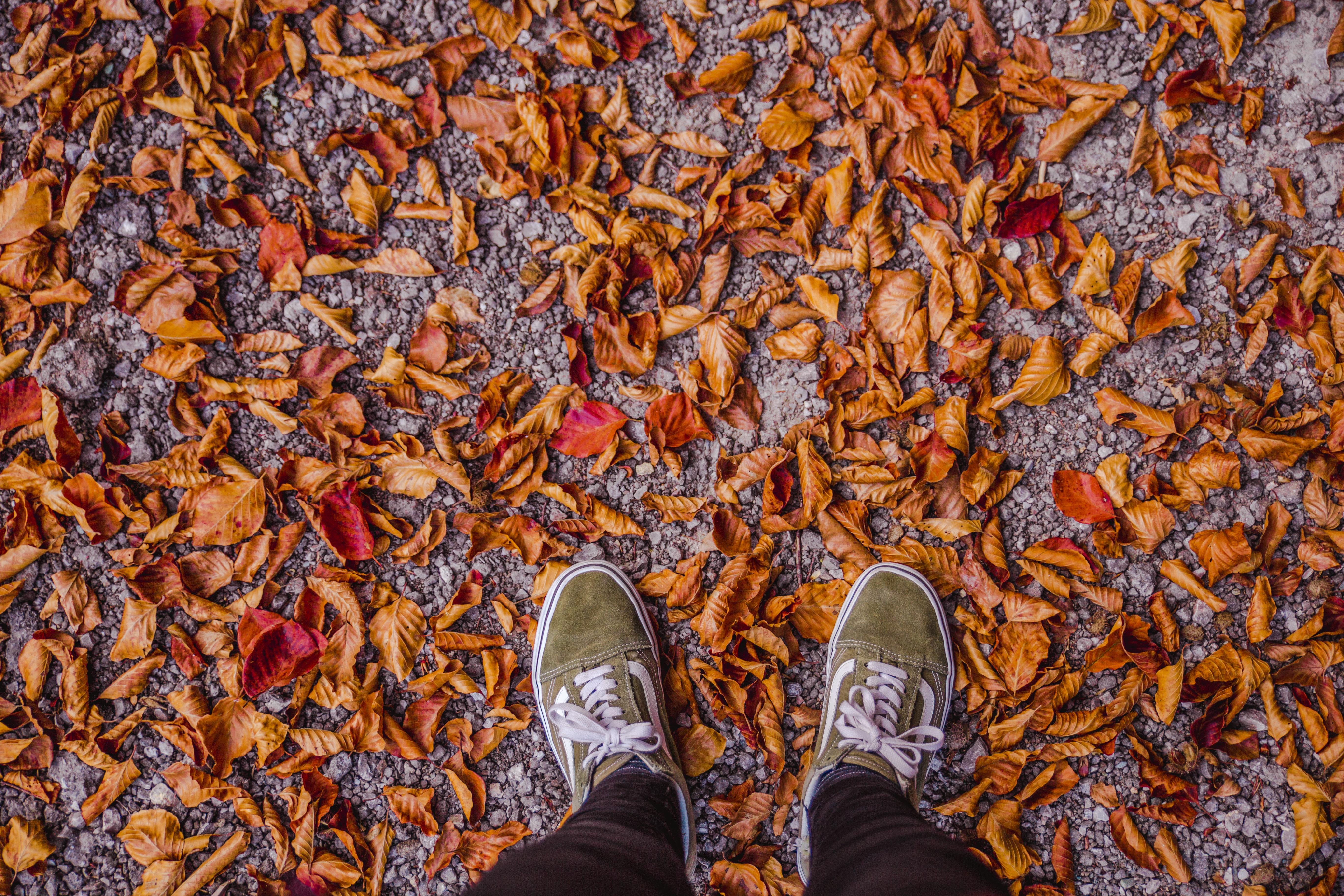 person standing brown dried leaves