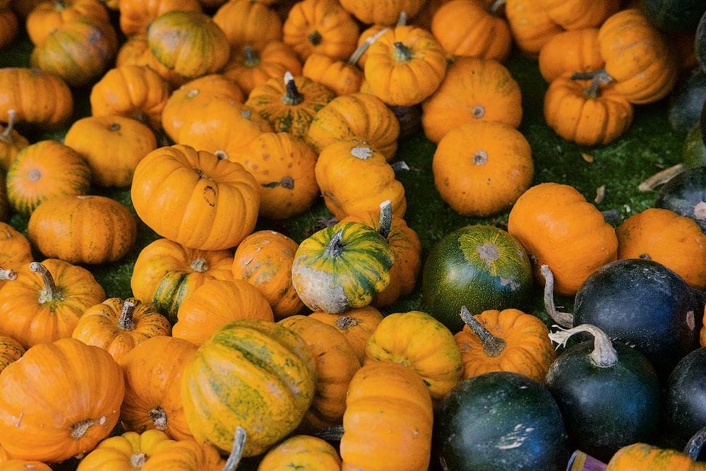 orange pumpkins and green squash vegetables on field
