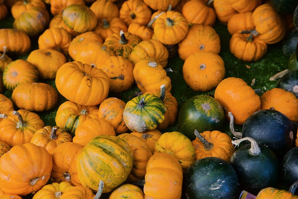 orange pumpkins and green squash vegetables on field