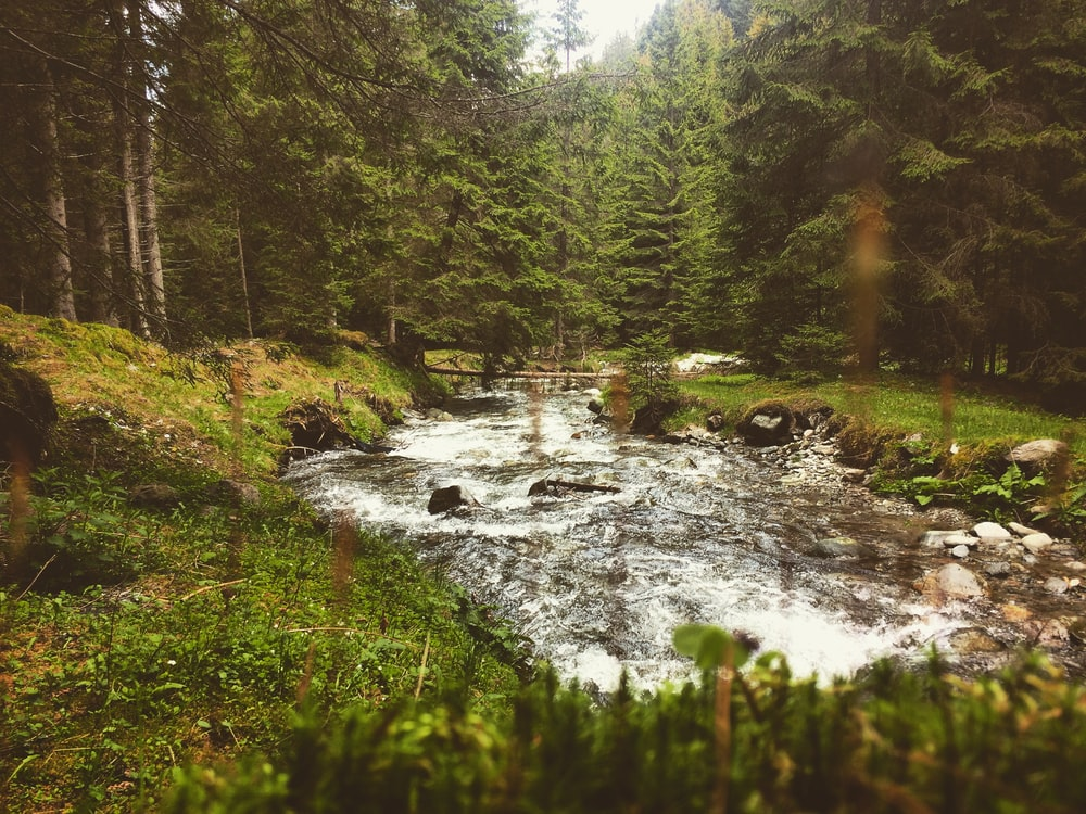 Stream, outdoors, creek and water | HD photo by Robert