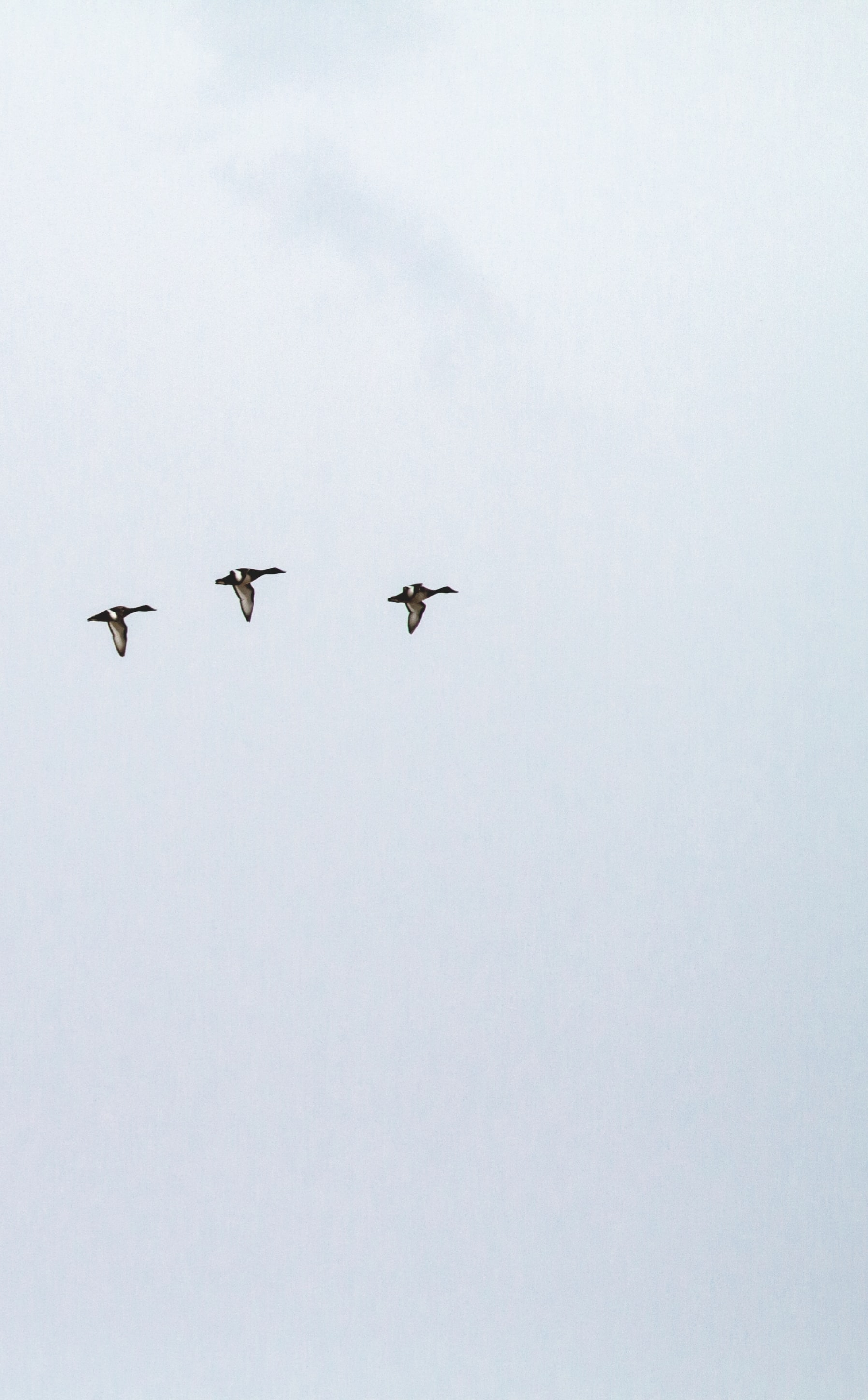 three ducks flying under the clouds during daytime