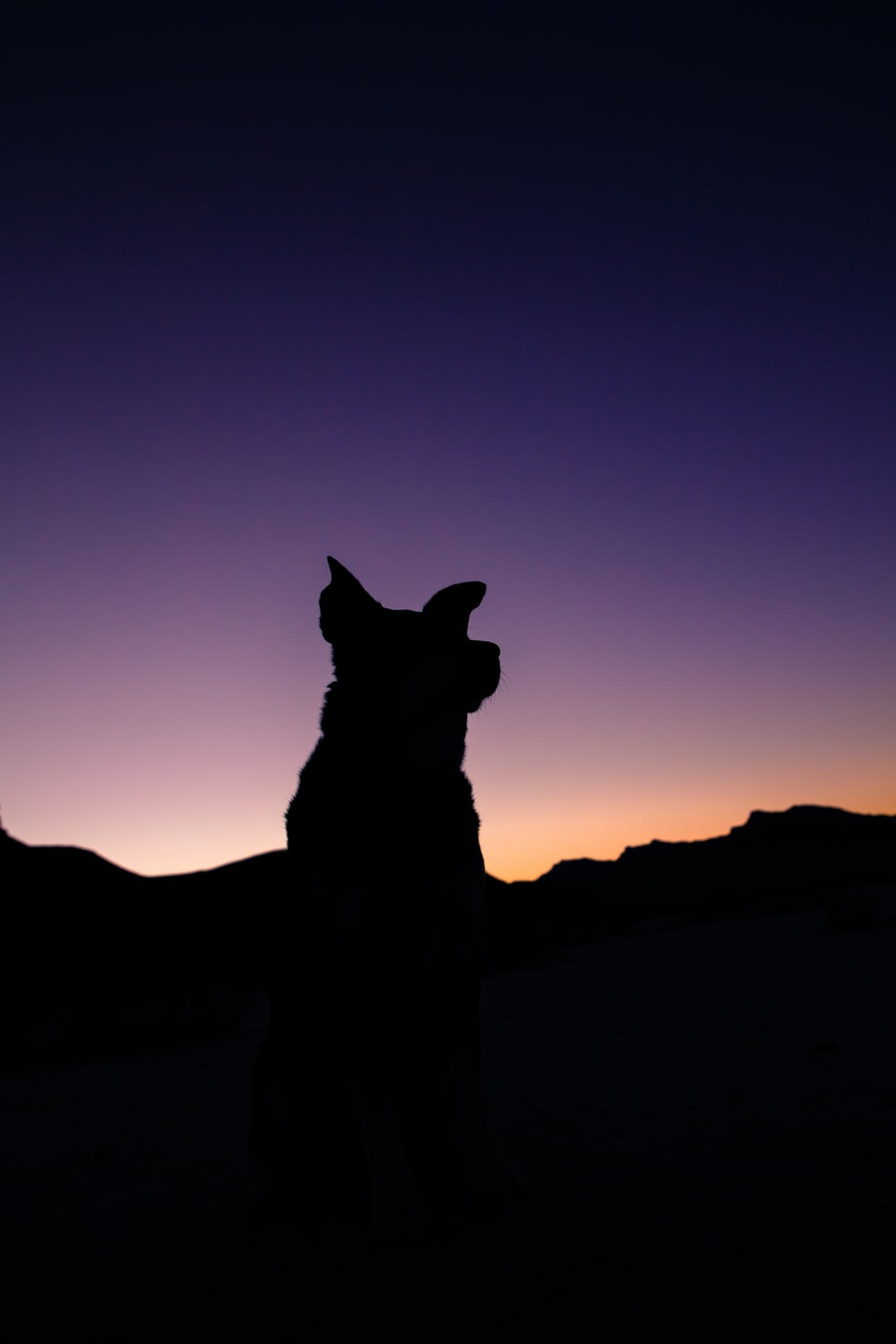 silhouette of dog during twilight