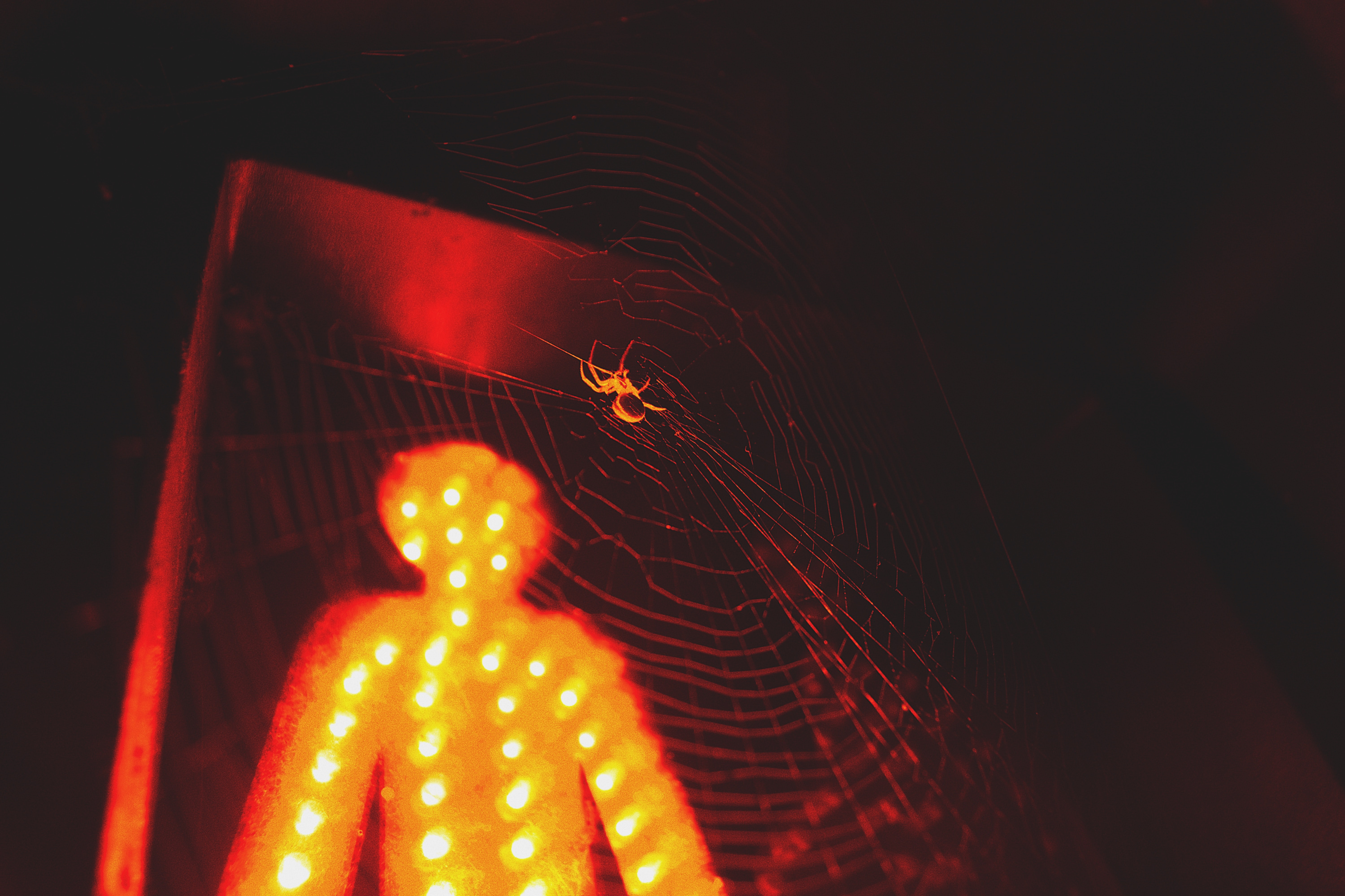 selective focus photography of spider in its web