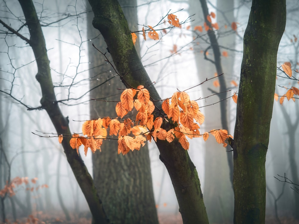 trees with orange dried leaves