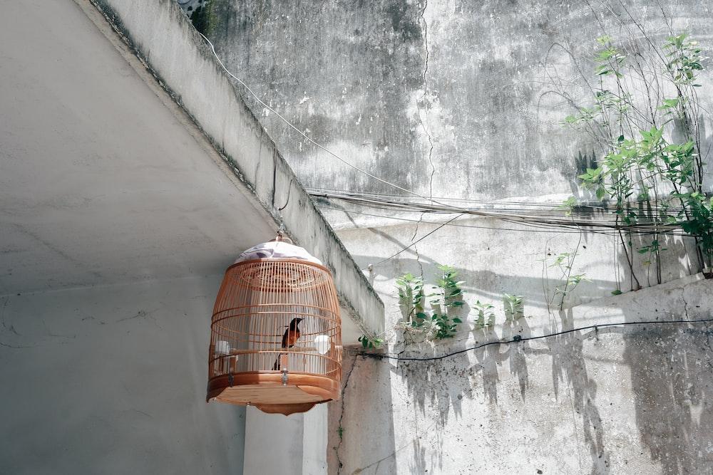 orange bird cage hanging during daytime