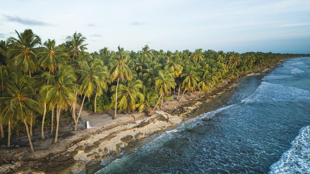 coconut tree near shore
