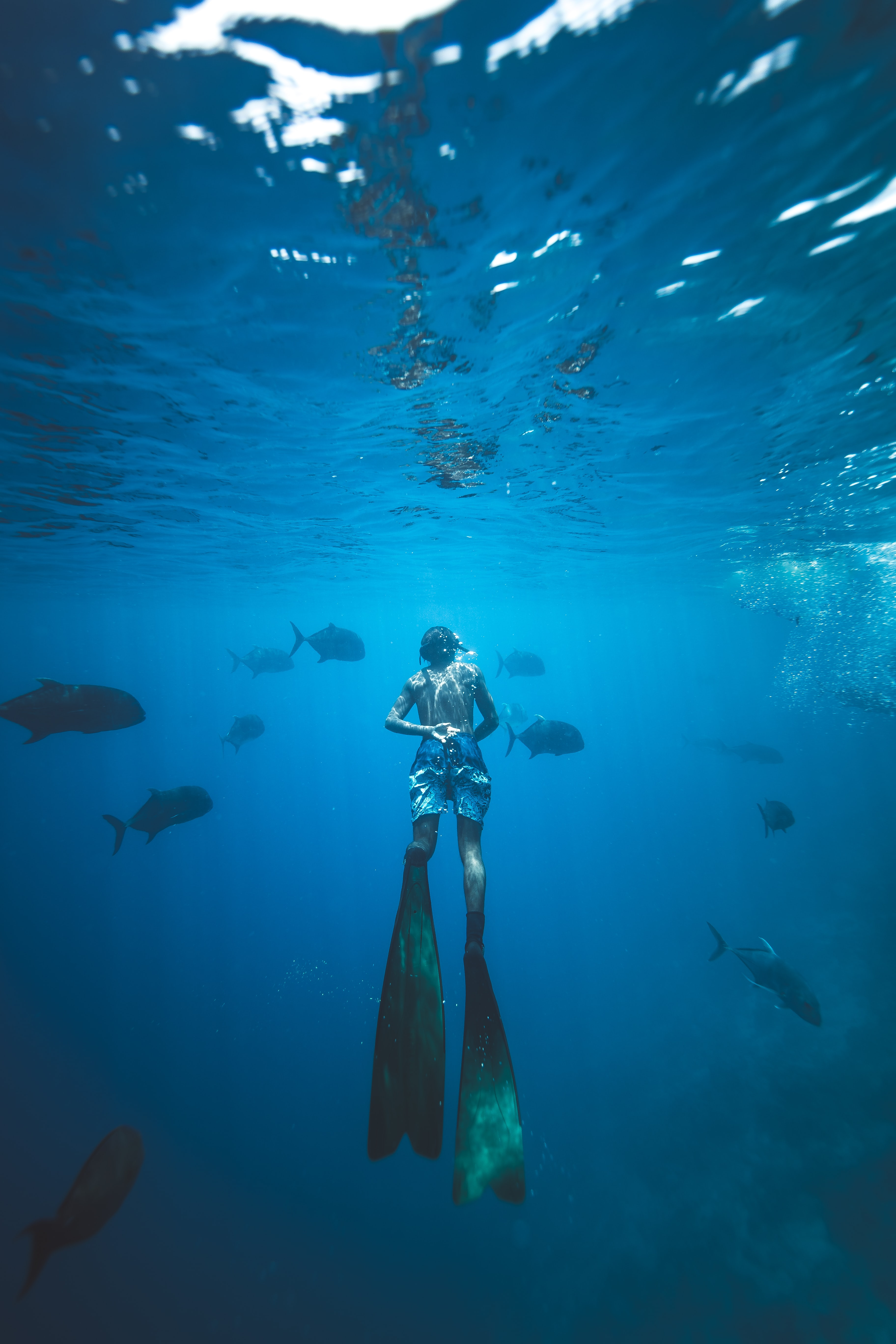 A diver swims underwater with tropical fish in the Maldives