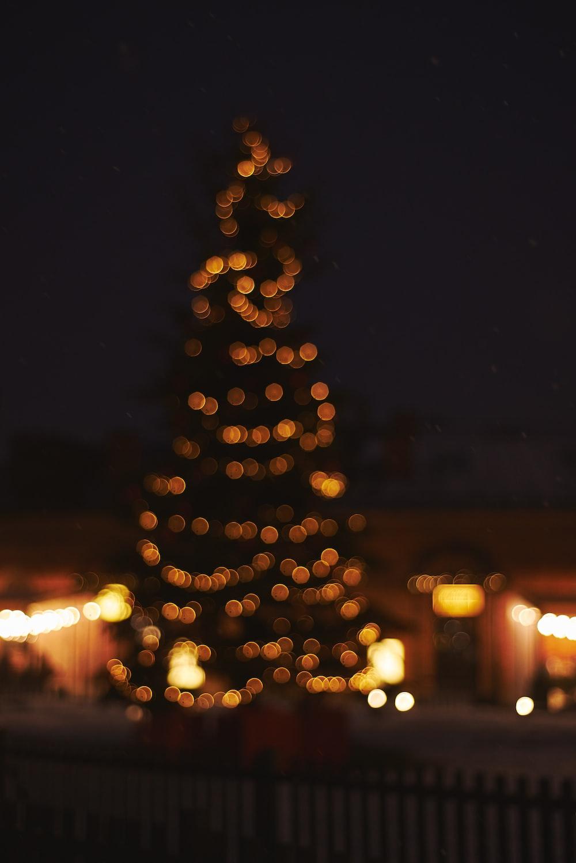 christmas tree near houses
