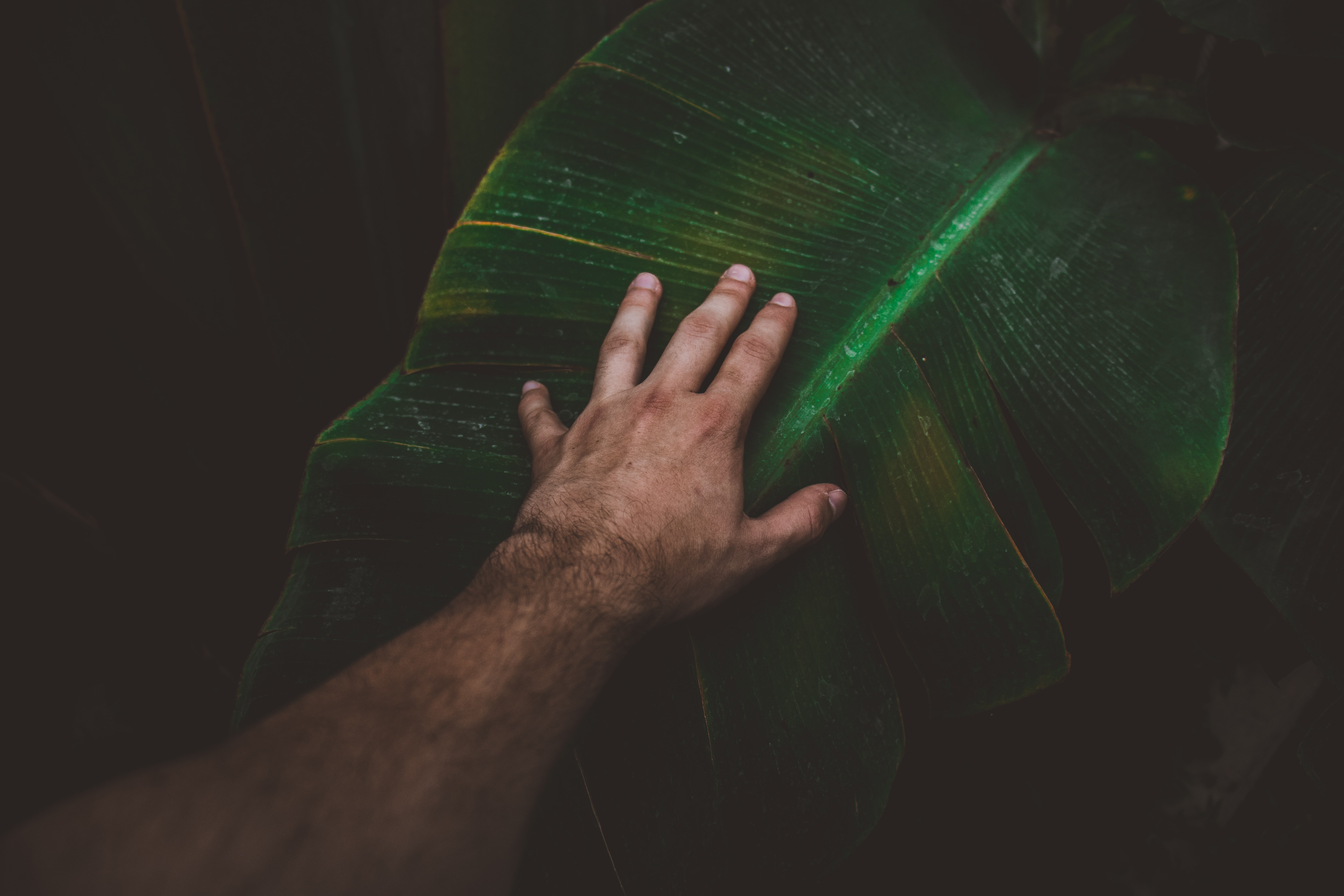person touching banana leaf