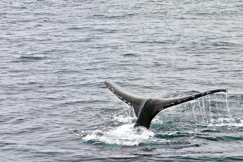 whale on ocean