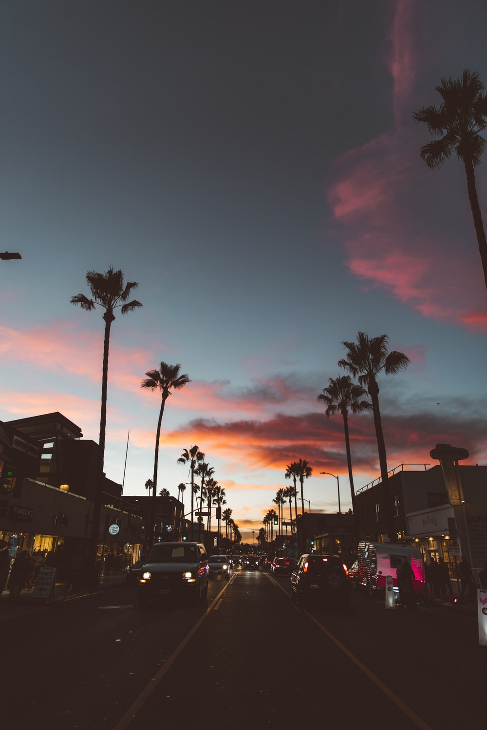 500 Sunset With Palm Tree Pictures Stunning Download Free