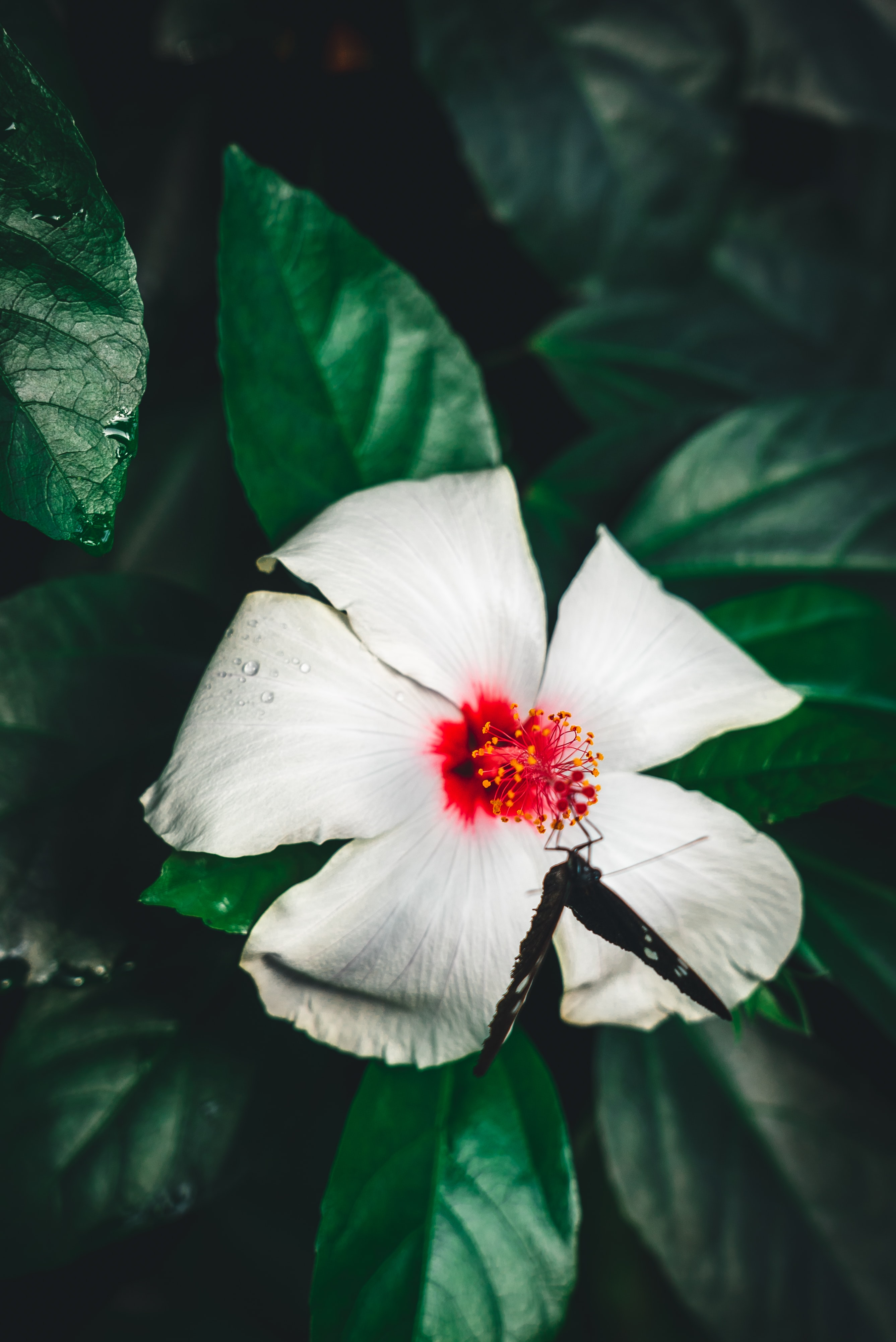 white and red flower