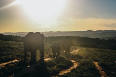 Photo taken in Addo Elephant National Park. After a whole day in the park, we saw these beautiful animals walking down the sunset.