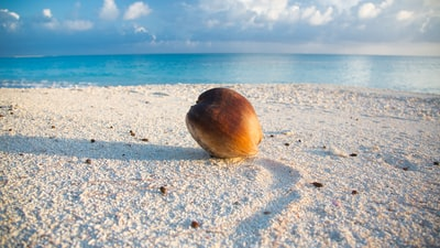 brown coconut on white sand near sea close-up photography marshall islands zoom background