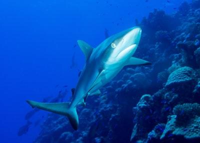 underwater shark marshall islands teams background