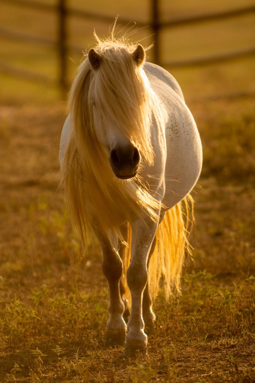 white horse inside barn