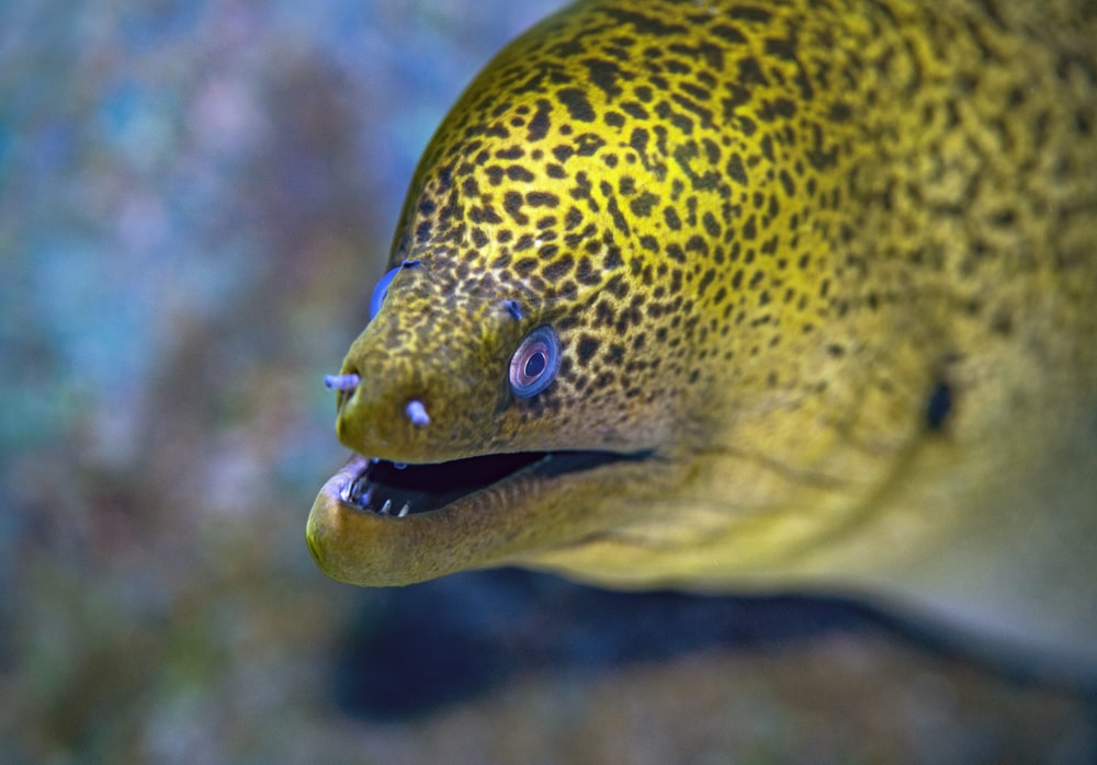 yellow and black fish close-up photography