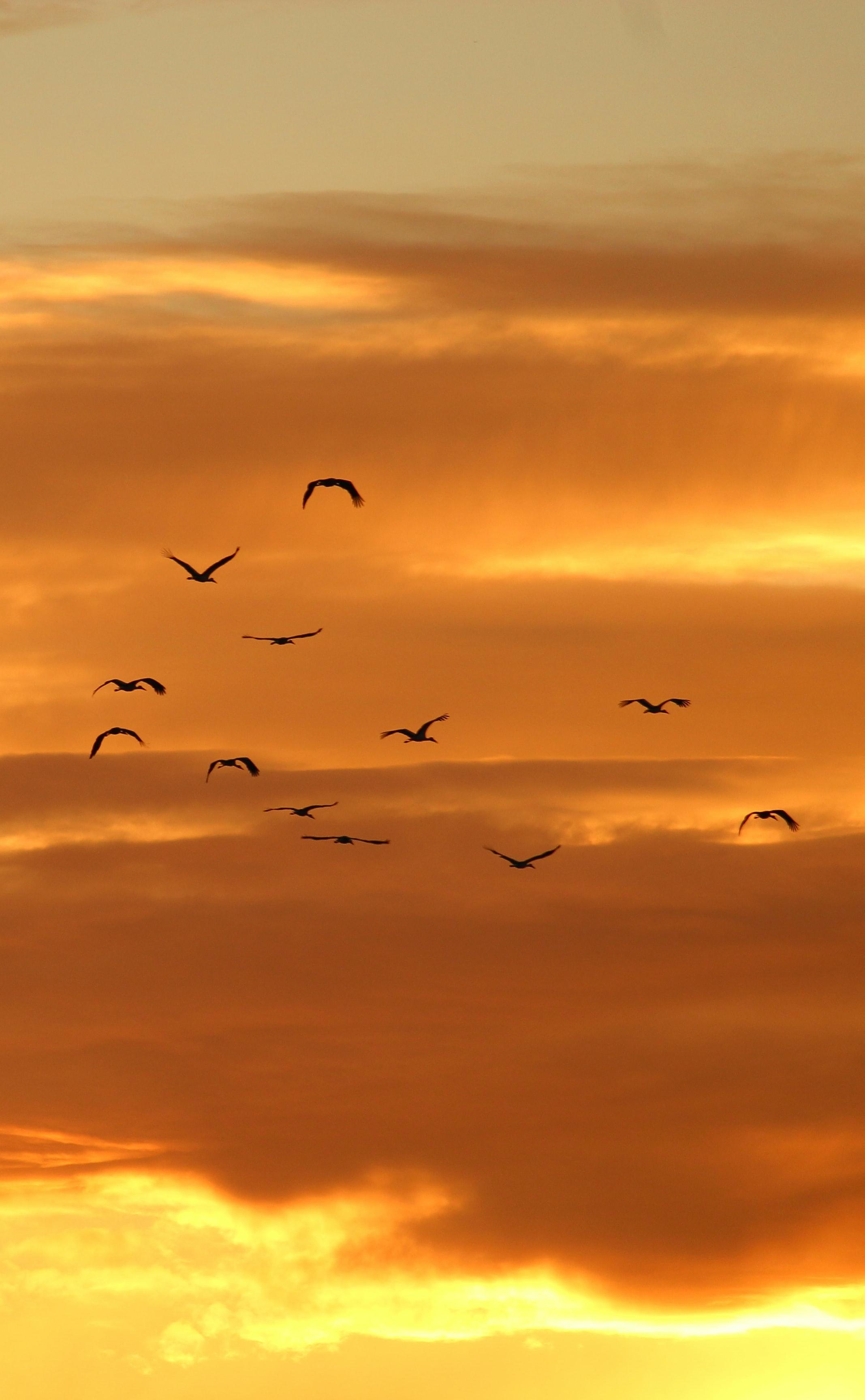 birds flying on sky