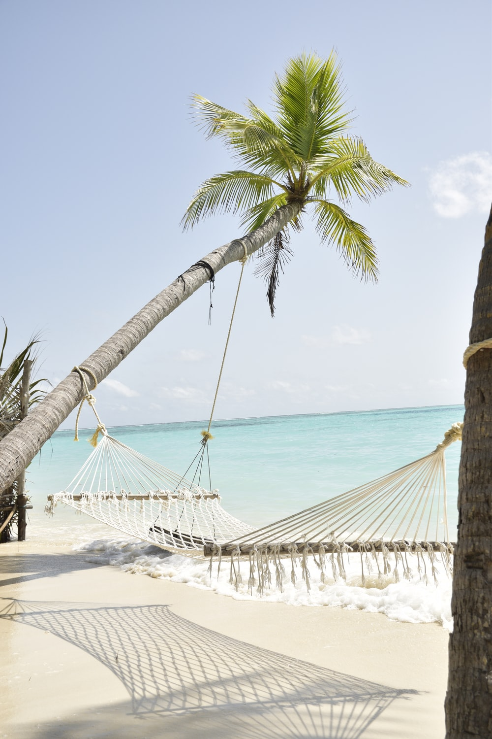coconut palm tree and hammock by the sea during daytime