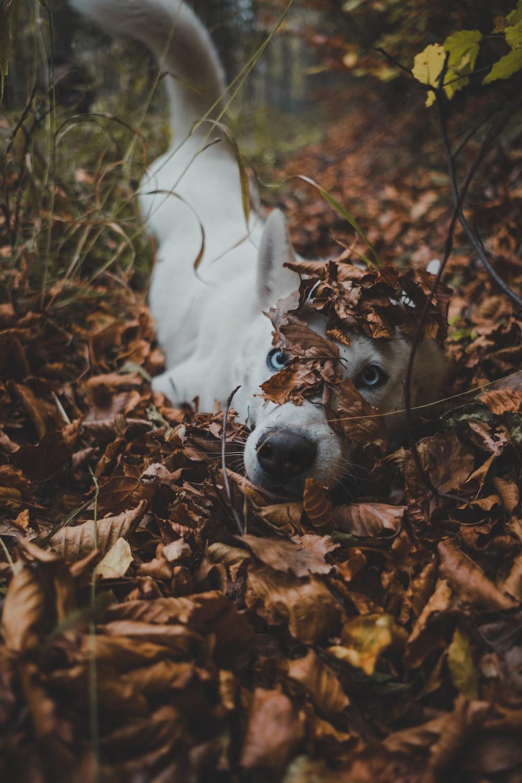 white dog lying in bush