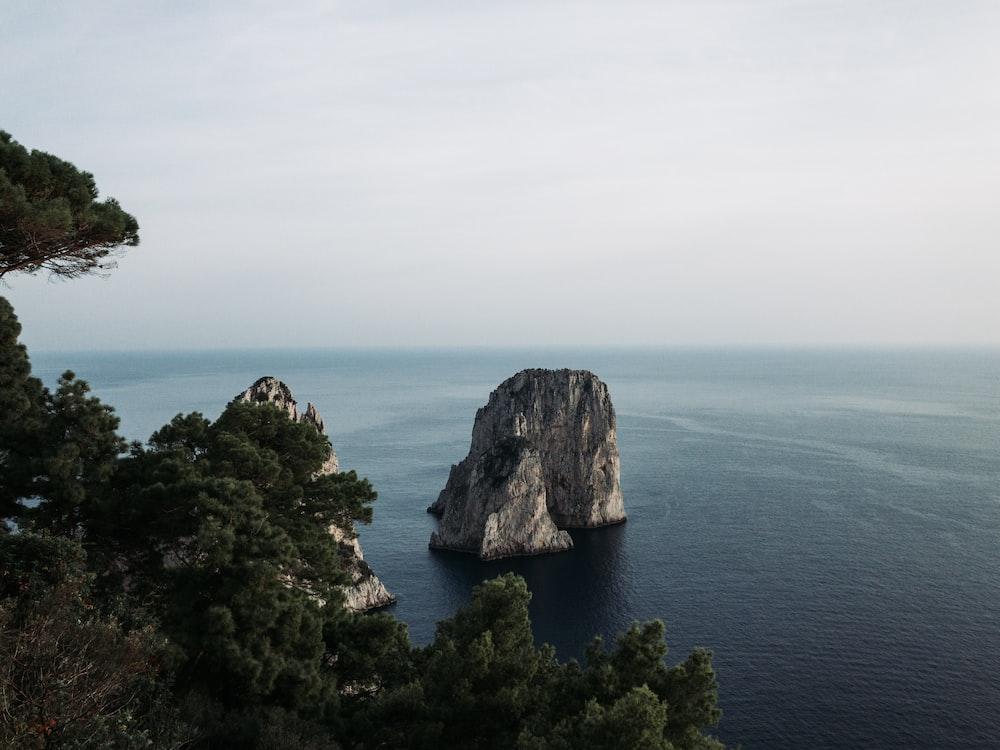 forest near rock formation on ocean