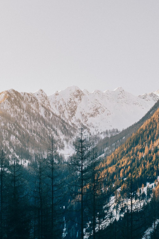 trees near mountain